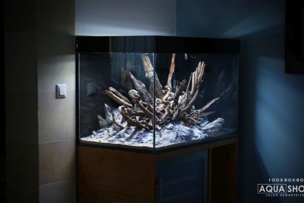 Akwarium Bociania